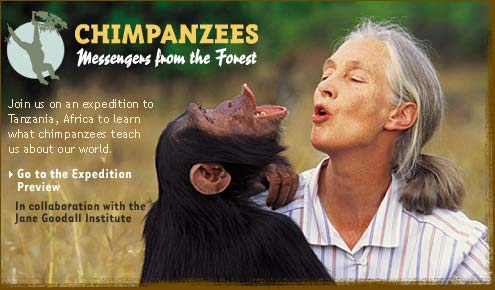 Chimpanzees: Messengers from the Forest